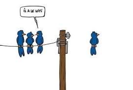 Oiseau wifi